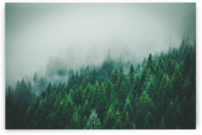Misty Trees by Danielle Farrell