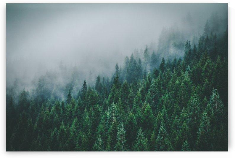 Misty Forest by Danielle Farrell