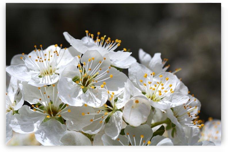 Reaching Up High Blossom by Joy Watson