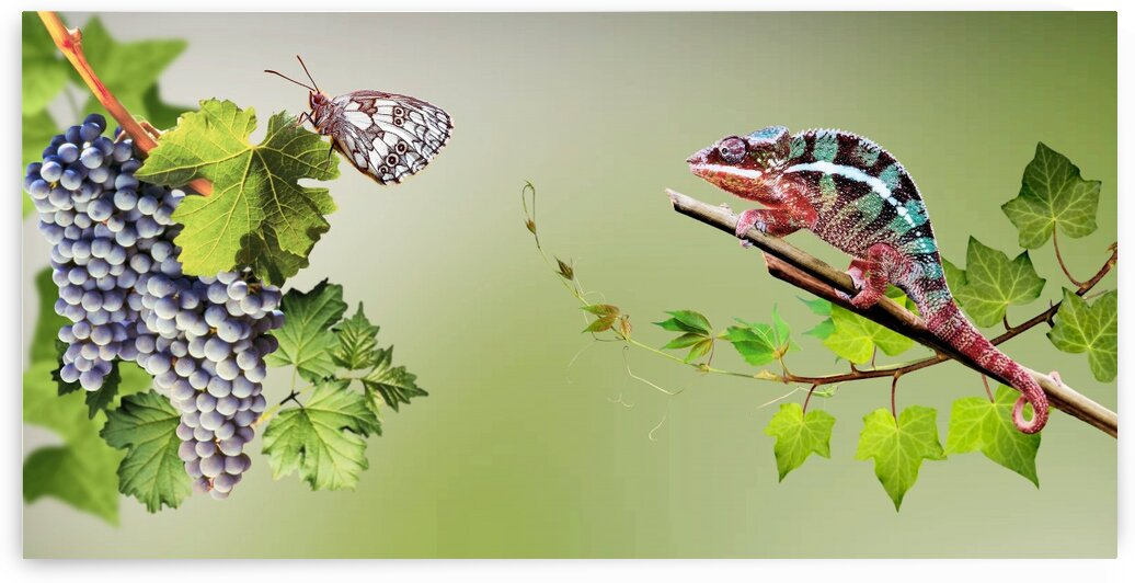 Butterfly and chameleon 2 by Radiy Bohem