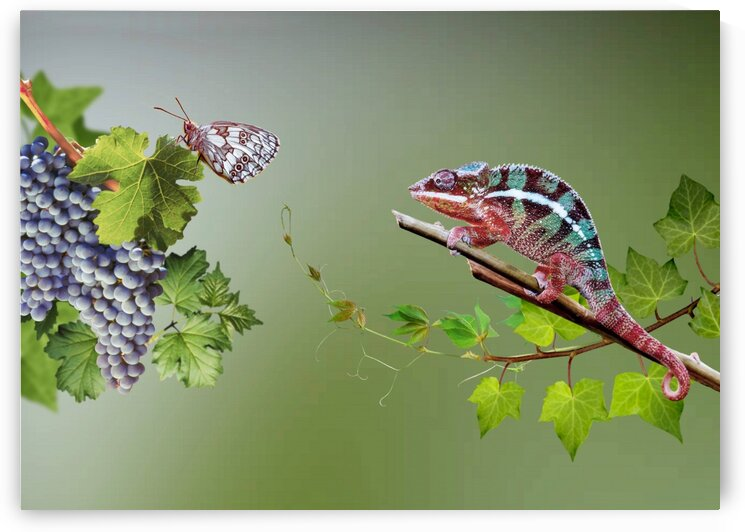 Butterfly and chameleon. Intrigue.  by Radiy Bohem