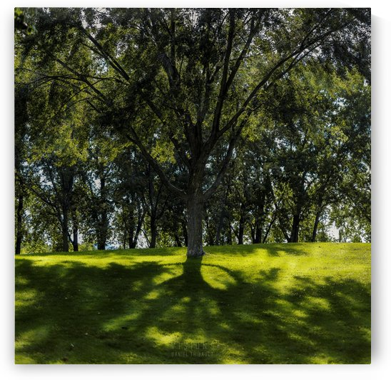 Solitaire by Daniel Thibault artiste-photographe