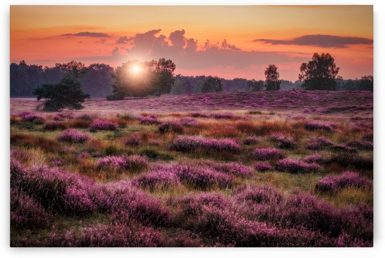 Heather Sunset 02 by Harald Mundt
