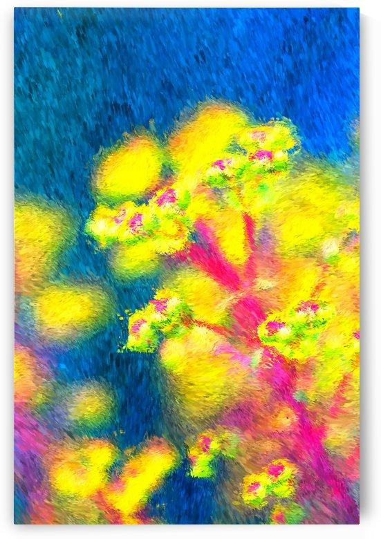 In The Garden by Joy Watson