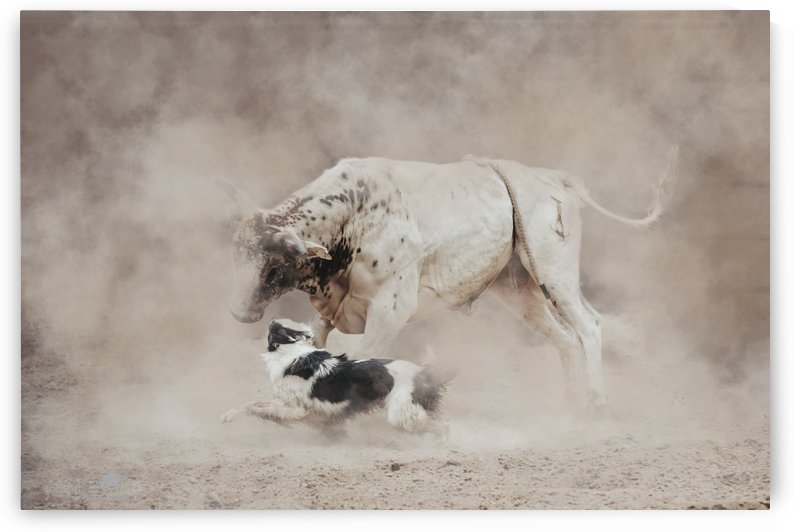 Running with the bulls by Georgina Ford Photography