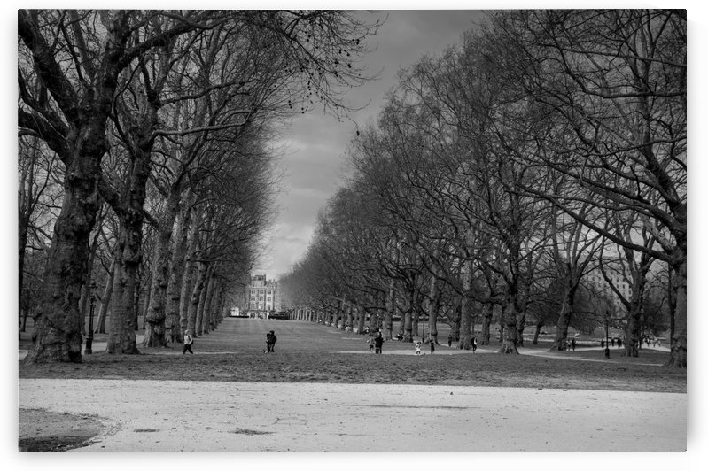 Green Park England Black and White by Bunnoffee Photography