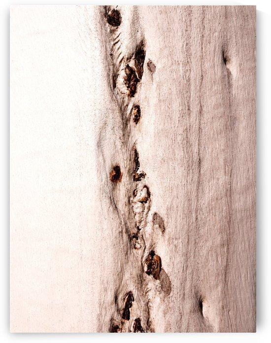 Ghost Gum Bark - 8 by Lexa Harpell