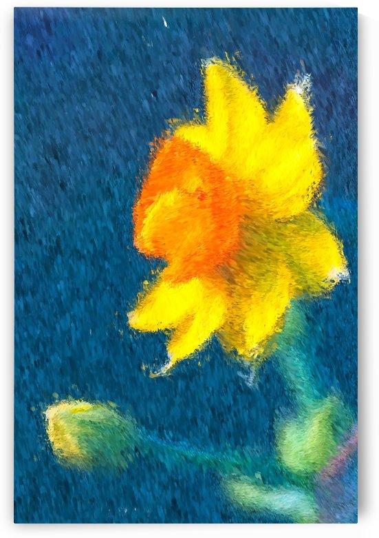 Reaching Out Daffodil by Joy Watson