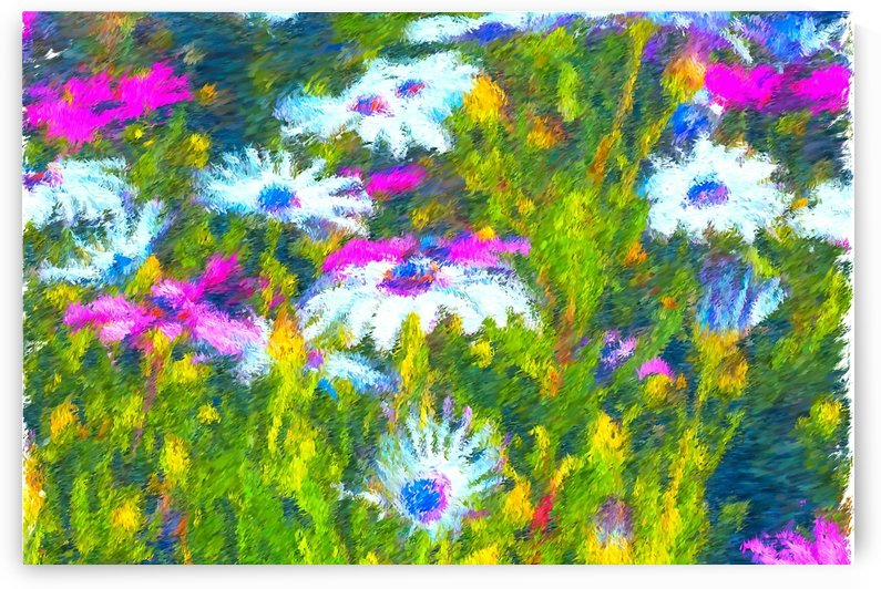 Joyful Daisy Field by Joy Watson