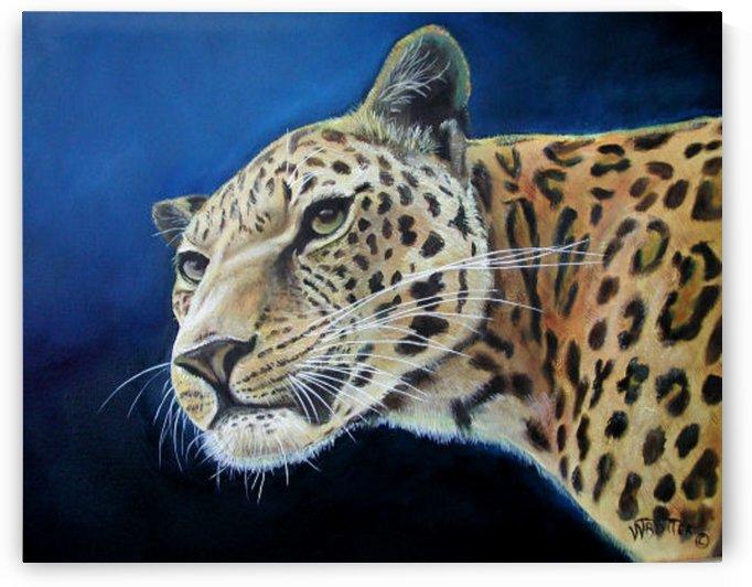 Hello Jaguar by Teresa Trotter
