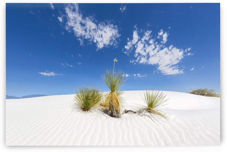 White Sands Impression  by Melanie Viola