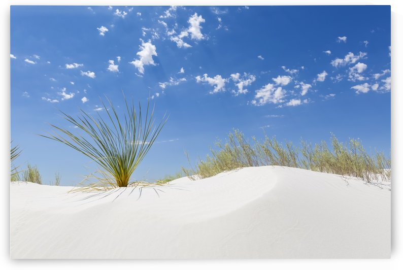 White Sands Minimalistic  Nature Impression  by Melanie Viola