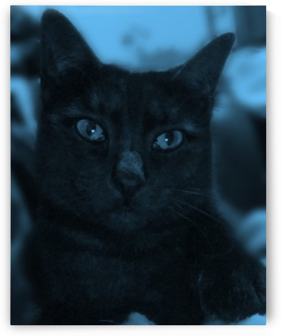 black cat in blue by venator corvus