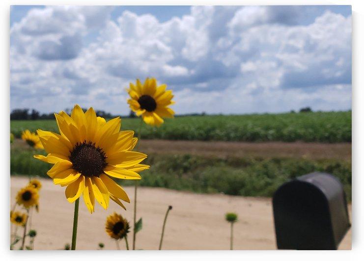 Dirt road views by Carson Jones