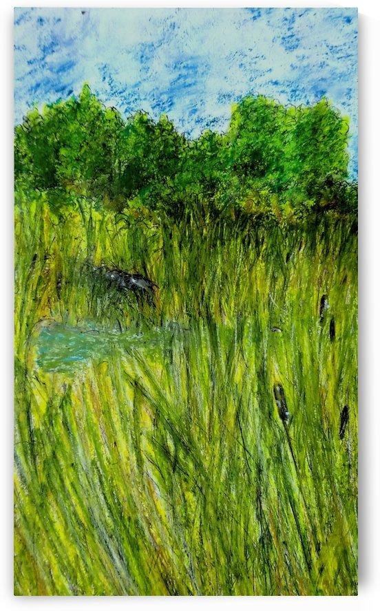 The Pond by djjf