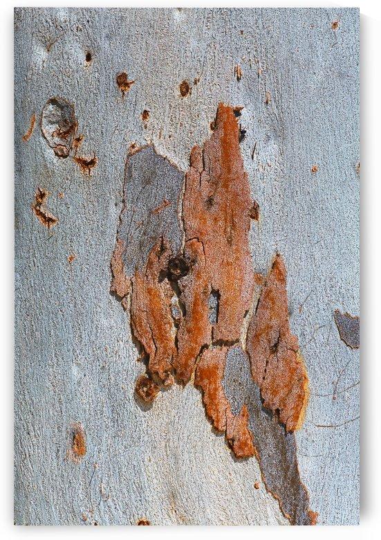 Eucalyptus Road Map by Joy Watson
