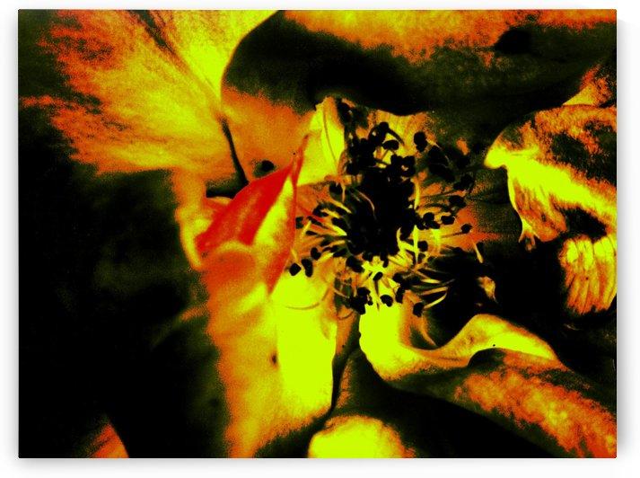 Art of the Burning Rose 3 by Jeremy Lyman