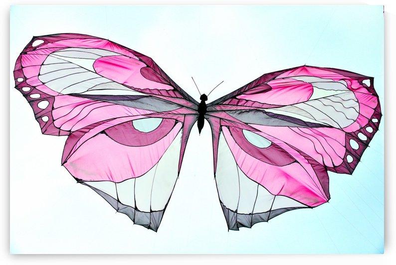 Papillon by Luigi Girola