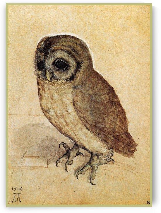 Little owl by Albrecht Durer