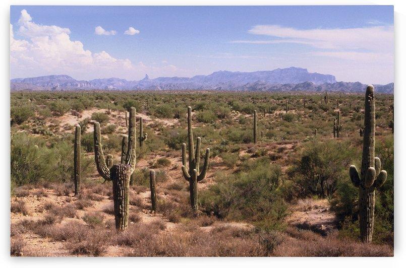 Sonora Desert Landscape Arizona Photograph by Katherine Lindsey Photography