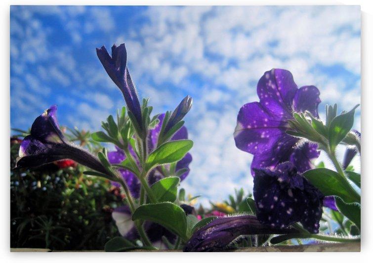 Starry Sky Flowers 1 by Jaeda DeWalt