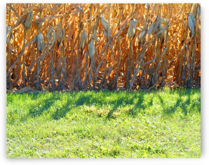 Cornstalk Shadows by Castle Green Enterprises