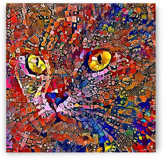 Kaleidoscope Kat by HH Photography of Florida