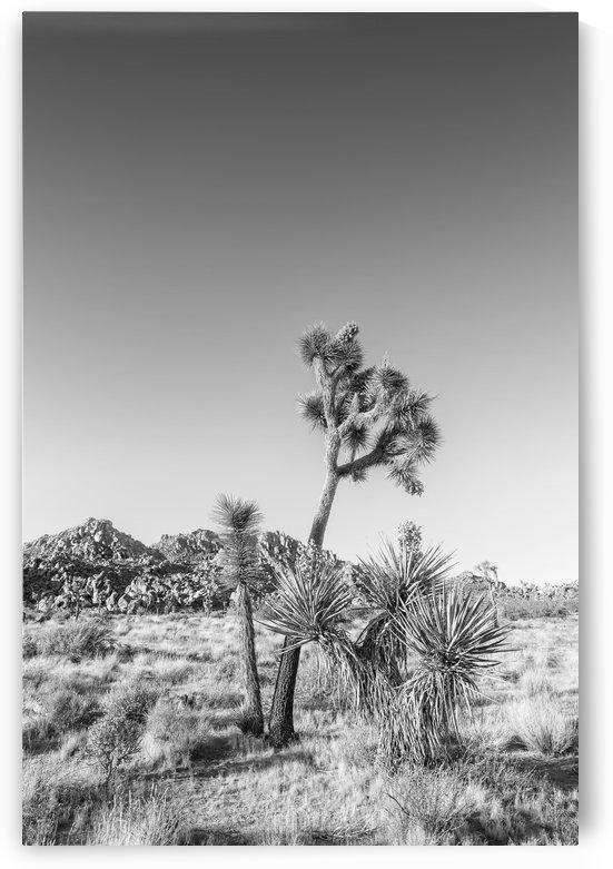 Joshua Tree National Park | Monochrome by Melanie Viola