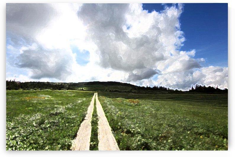 Field Landscape by Albert Serino