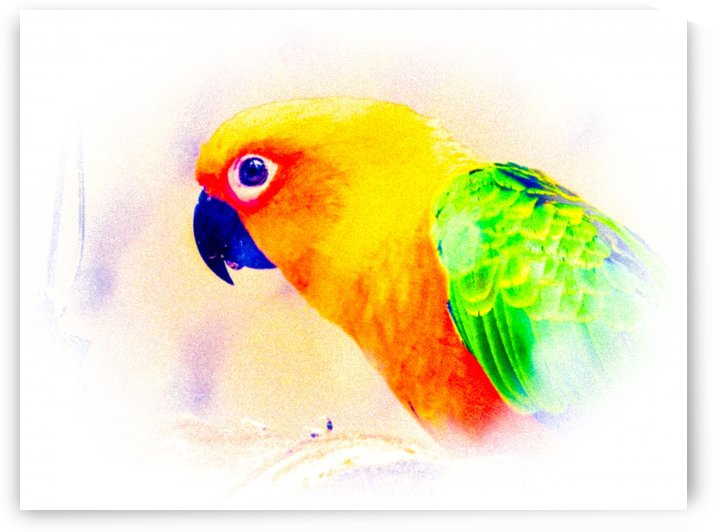 Parrot by Kishore Dharuman