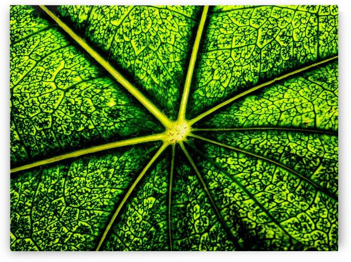 Big flower leaf by Kishore Dharuman