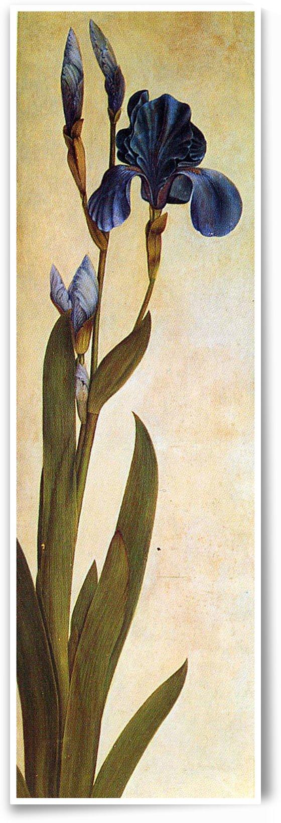 Iris Troiana by Albrecht Durer