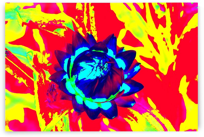 Graphic Flower Effect 2 by Kishore Dharuman