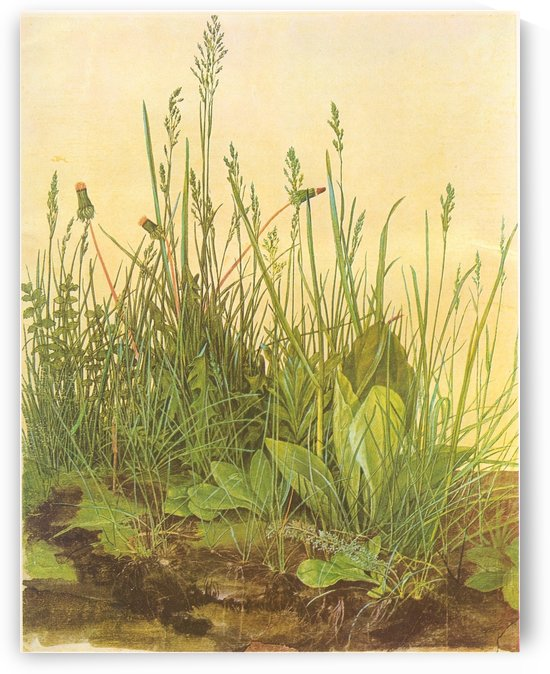 The large turf by Albrecht Durer