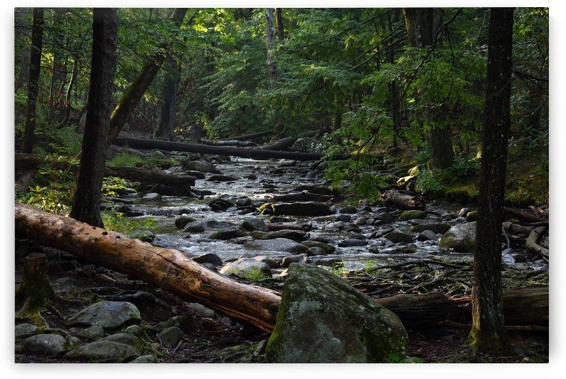 Over the River Into the Woods by MDruba