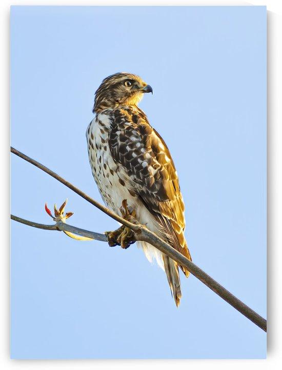 Hawk 42t by Ian Barr