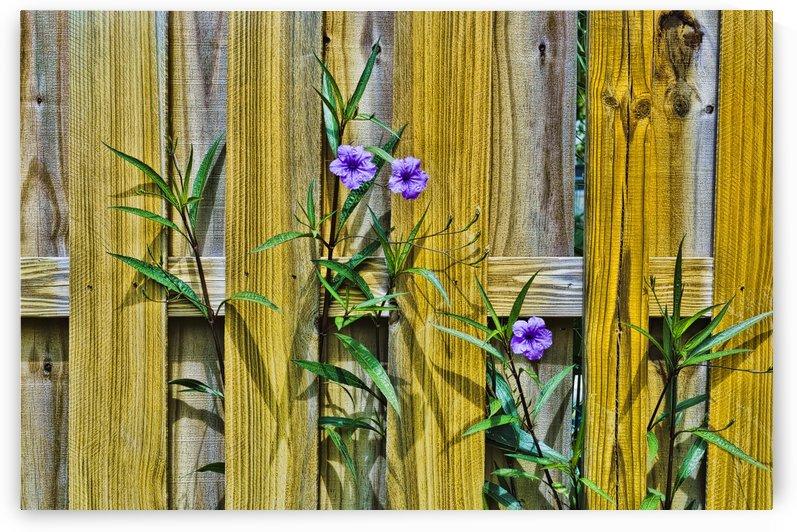 Fence Flowers 2 by Ian Barr