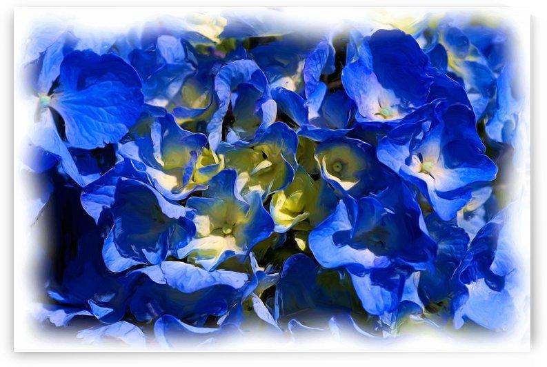 Hydrangea Blue  by Joy Watson