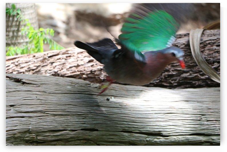 Green Dove by Kathleen OConnor