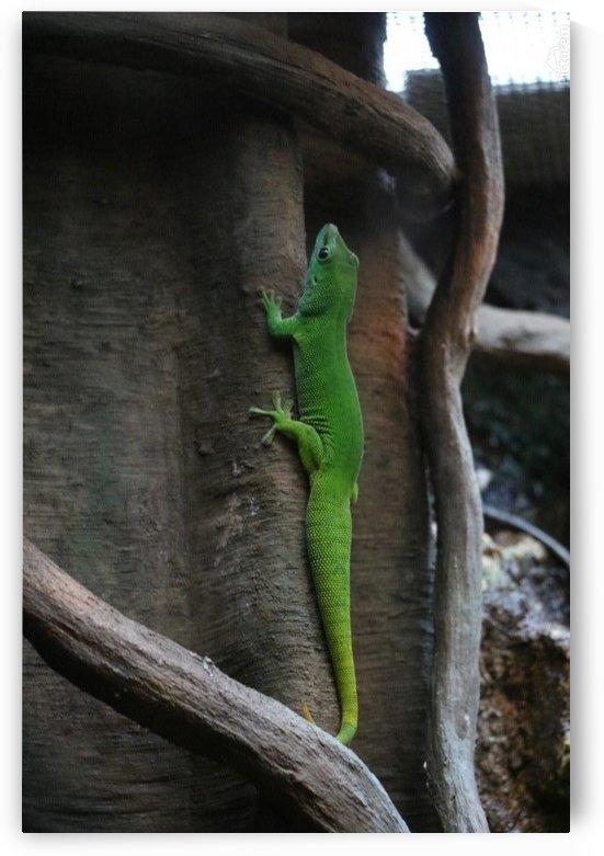 Green Gecko by Kathleen OConnor