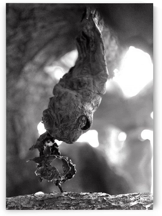 A Cactus Snake by Natasha Shakhnes