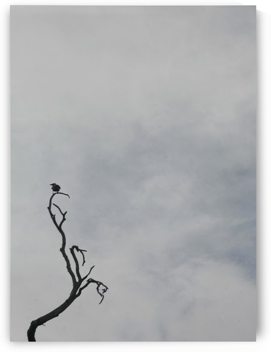 A Branch by Natasha Shakhnes