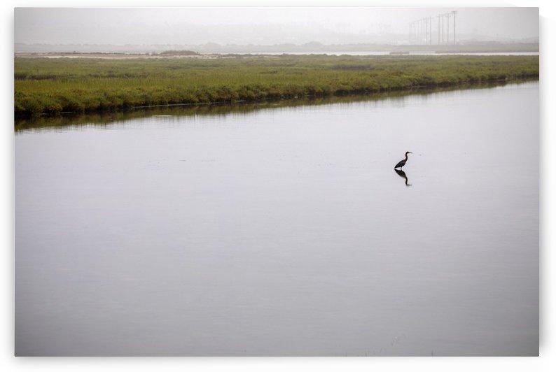 Lone Heron by Kaye