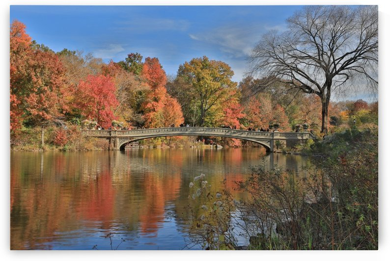 Central Park in the Fall by Kaye