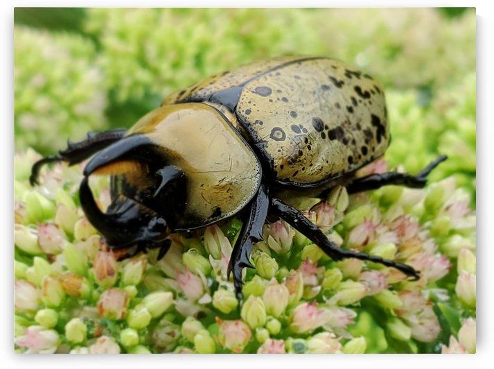 Beetle 1 by HappyDewDrop