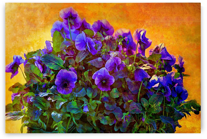 Painted Pansies by HH Photography of Florida