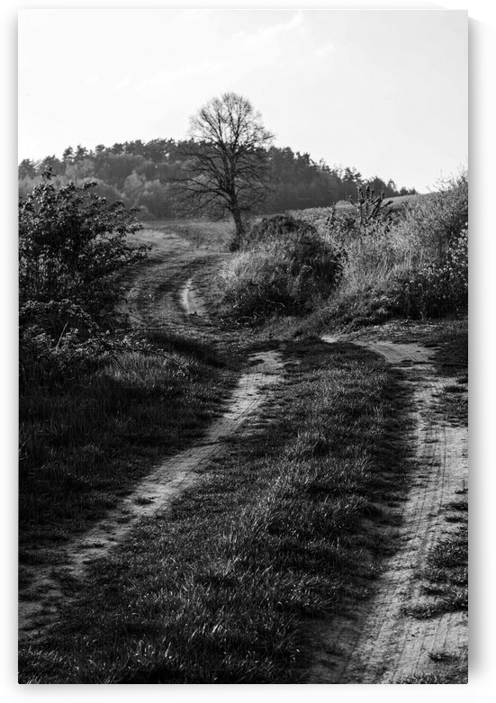 The path by Ola Photography