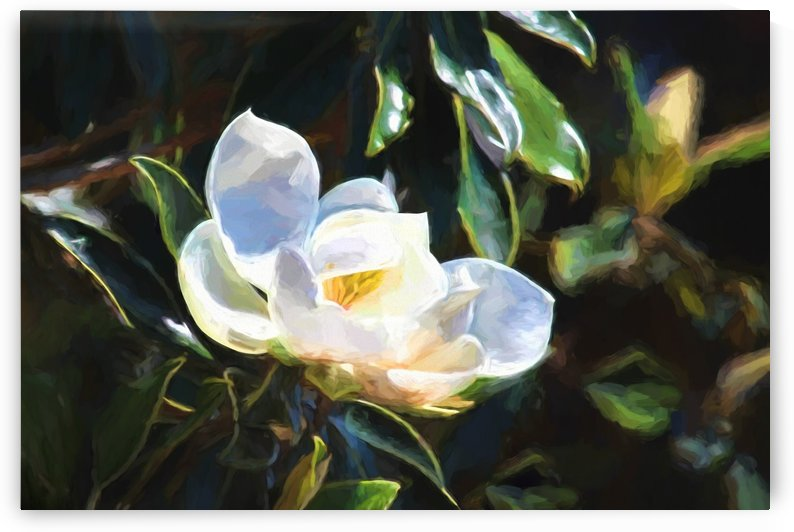 Painted Magnolia Blossom by HH Photography of Florida