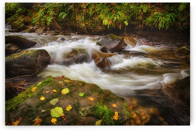 Autumn at Melincourt Brook by Leighton Collins