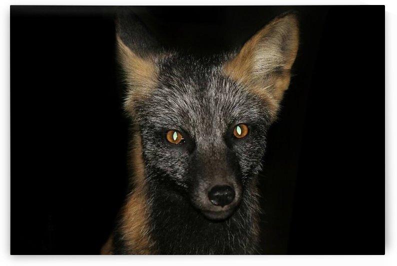 LRM_EXPORT_24316299465035_20191009_150349392 by Brandon Collins Wildlife Photography
